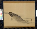 Carp swimming in clear water (EA1973.144)