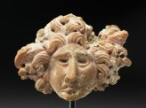 Coral head of Medusa
