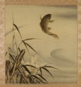 Leaping carp