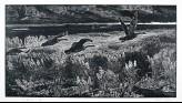 The Sleepless Land (EA2007.50)
