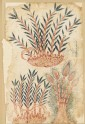 Three bamboo shoots, from a De Materia Medica manuscript