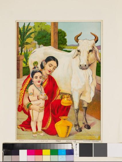 Go-dohana milking the cowfront