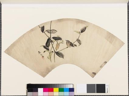 Sparrow on an akebi plantfront
