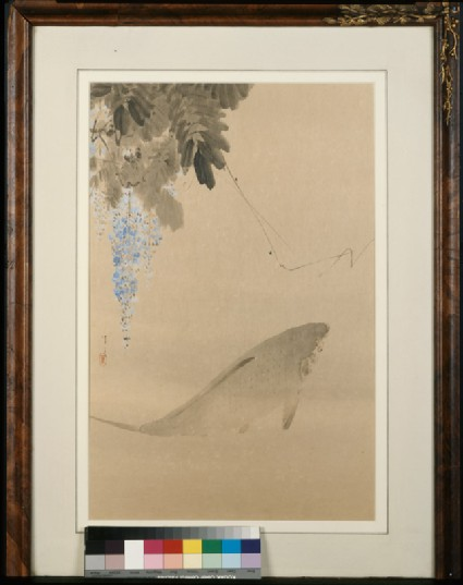 Carp and wisteriafront