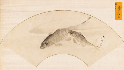 Two carp swimming in a poolfront