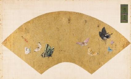 Butterfliesfront