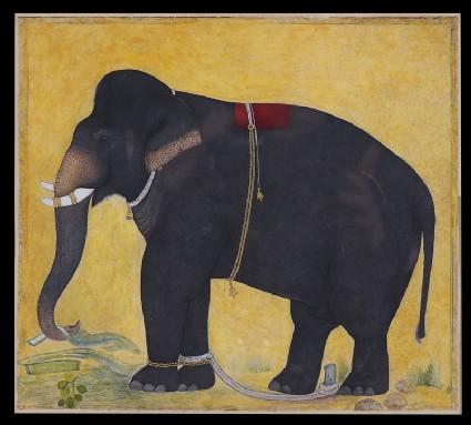 Young elephant eatingfront