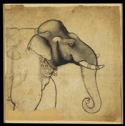 Head of an elephantfront