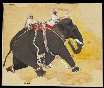 Elephant at a gallopfront