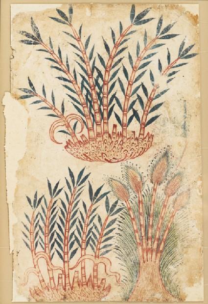 Three bamboo shoots, from a De Materia Medica manuscriptfront