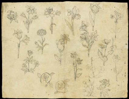 Sheet of flower studiesfront