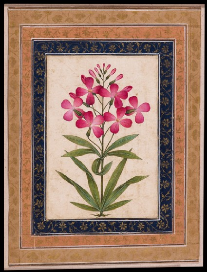 Botanical study of a geraniumfront