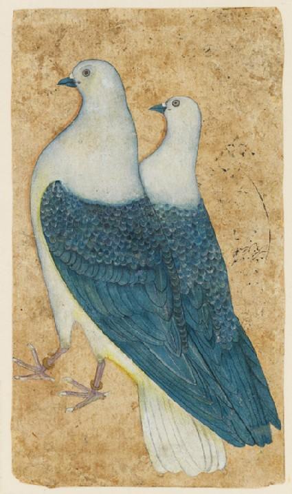 Two pigeonsfront