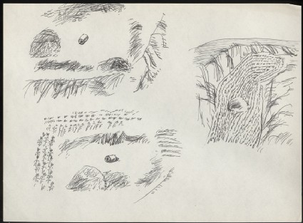 Three sketches of cropsfront